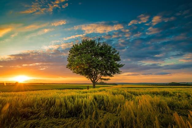 草に囲まれた日没時に曇った空の下で成長する一本の木の広角ショット 無料写真