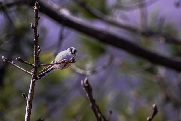 Широкоугольный снимок белой птицы, сидящей на вершине ветки дерева Бесплатные Фотографии