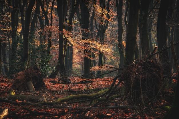 秋の間に倒れた枝を持つ背の高い森の木の広角ショット 無料写真
