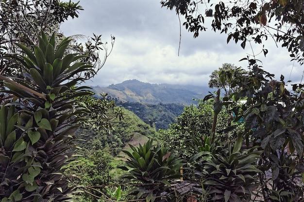 昼間の山の樹木や森の広角ショット 無料写真