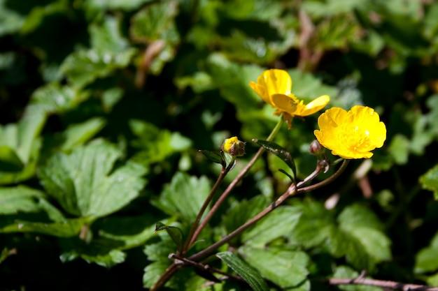 隣同士の2つの黄色い花の広角ショット 無料写真