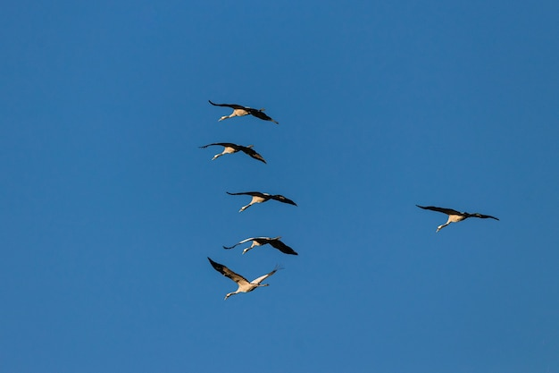 Wide angle shot of several birds flying under a blue sky Free Photo
