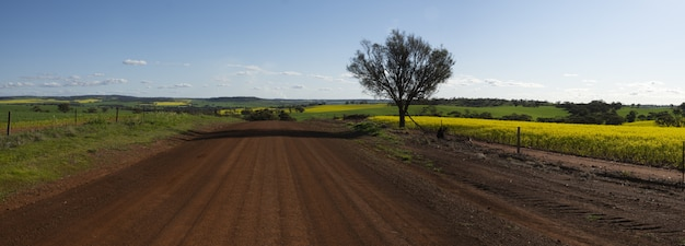 Wide of a gravel road by the beautiful fields captured on a sunny day Free Photo