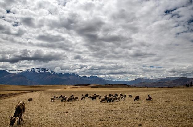 Grandangolo di animali che mangiano nel campo di erba secca in una giornata nuvolosa Foto Gratuite