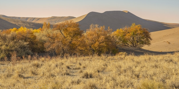 Wide shot of a desert with dried bushes and sand dunes at daytime Free Photo