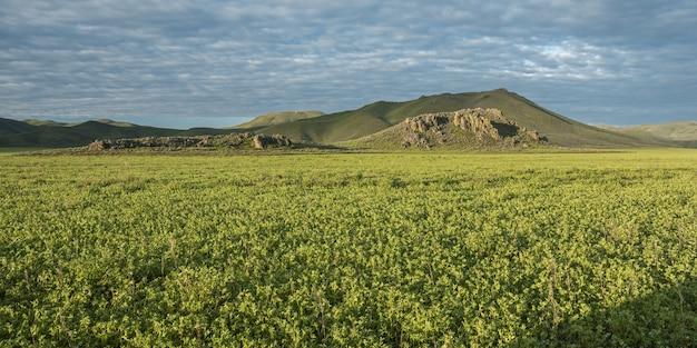 Panoramica di un campo con le piante verdi e le montagne nella distanza sotto un cielo nuvoloso blu Foto Gratuite