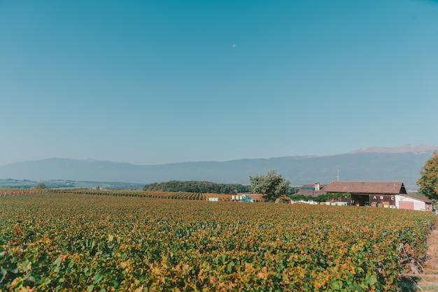 Общий вид мирного поля с домом и чистым голубым небом в швейцарии Бесплатные Фотографии