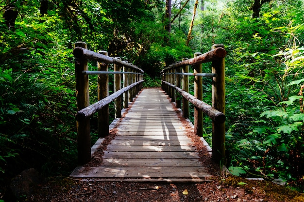 Широкий выстрел из деревянного моста в окружении деревьев и зеленых растений Бесплатные Фотографии