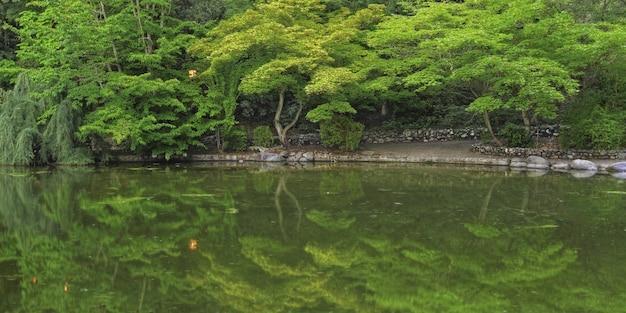 Широкий выстрел из отражения красивых зеленых деревьев в озере Бесплатные Фотографии