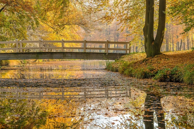 Wide shot of a park with a calm lake and a bridge surrounded by  trees Free Photo