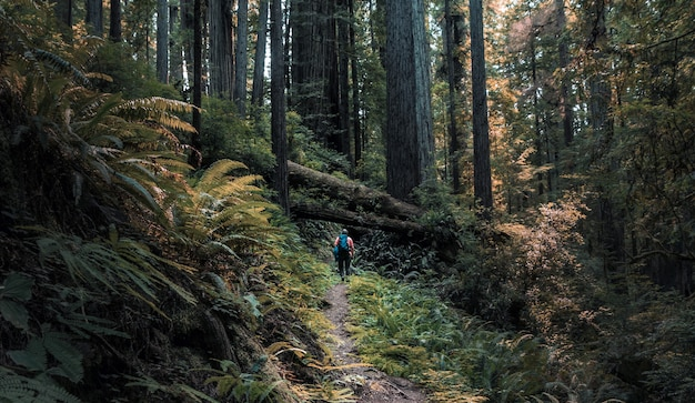 Wide shot of a person walking around a narrow pathway in the middle of trees and plants in a forest Free Photo