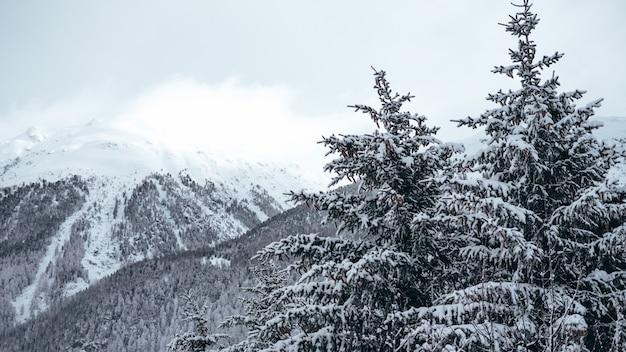 Panoramica dei pini e delle montagne coperte in neve Foto Gratuite