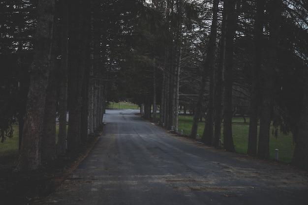 Panoramica di una strada circondata dagli alberi in una foresta Foto Gratuite