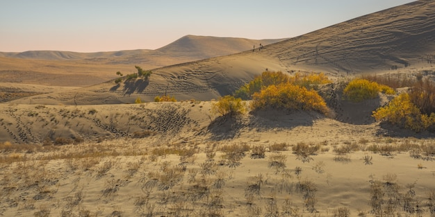Wide shot of yellow leafed plants  in the desert with sand dune and mountain Free Photo