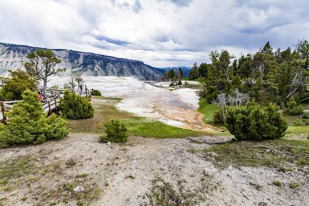 Grandangolo del parco nazionale di yellowstone pieno di alberi e cespugli verdi Foto Gratuite