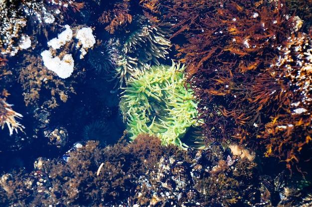 Ampio colpo subacqueo di barriere coralline verdi e marroni Foto Gratuite