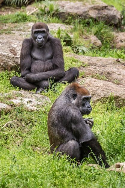 野生のアフリカ動物 Premium写真