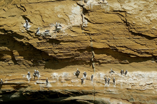 Wild birds perching on la catedral arch, the famous rock formation at paracas, peru Premium Photo