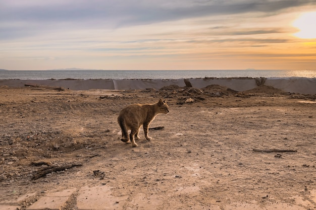 夕暮れ時の山の上の野生の猫 無料写真