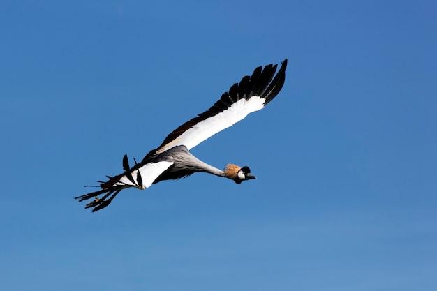 夏に青空を飛ぶ野生のツル 無料写真
