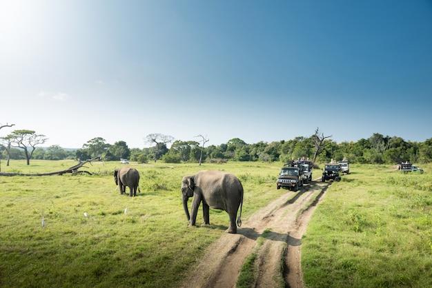 Wild elephants in a beautiful landscape in sri lanka Premium Photo