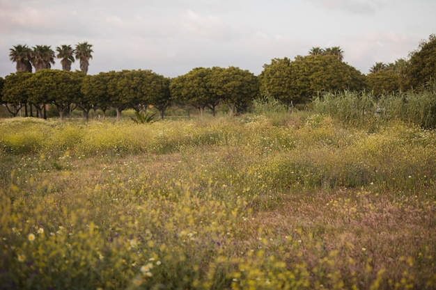 Wild flowers and green tree landscape Free Photo