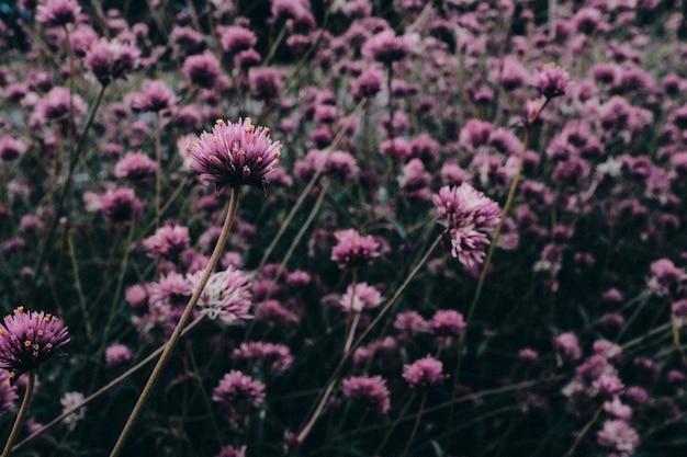 野生の花 Premium写真