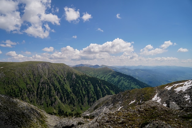 Wild forest growing on the mountainside Premium Photo