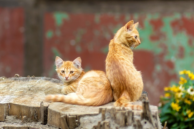 Wild ginger kittens are resting in a tree garden Premium Photo