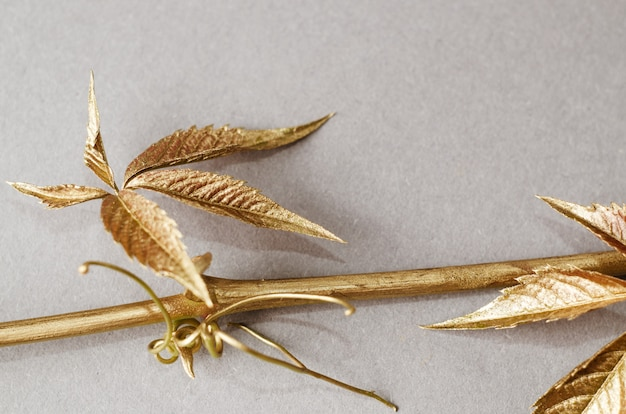 Wild grapes leaves painted in gold. concept still life on grey background. Premium Photo
