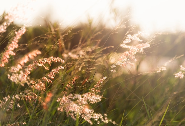 Wild grass growing in nature Free Photo