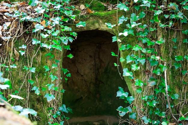 野生の緑の洞窟 Premium写真