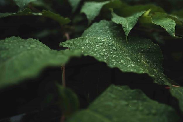 それらに露が付いている野生の緑の葉 無料写真