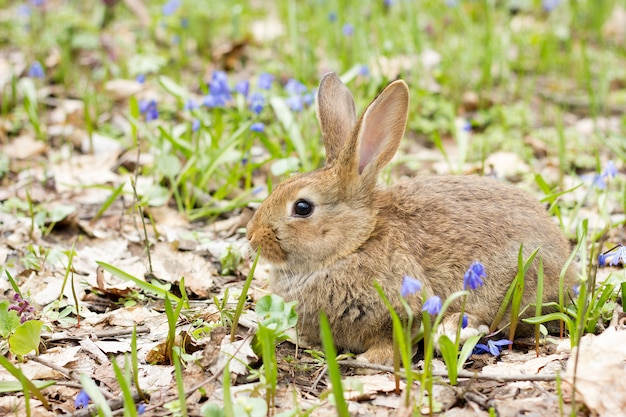 Wild hare on a flowering meadow in spring. Premium Photo