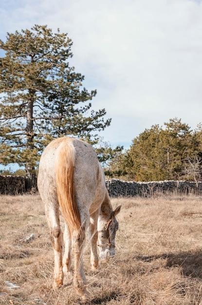 Cavallo selvaggio nella foresta all'aperto Foto Gratuite