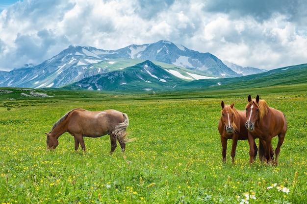 산 골짜기, Laganaki, 러시아에서 방목하는 야생 말 프리미엄 사진