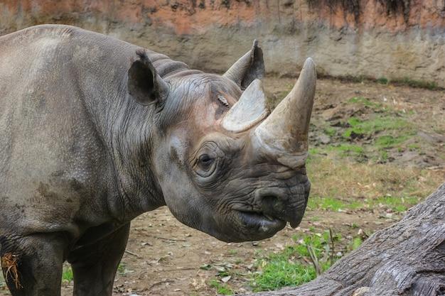 A wild rhinoceros on green grass land outdoor park. Premium Photo