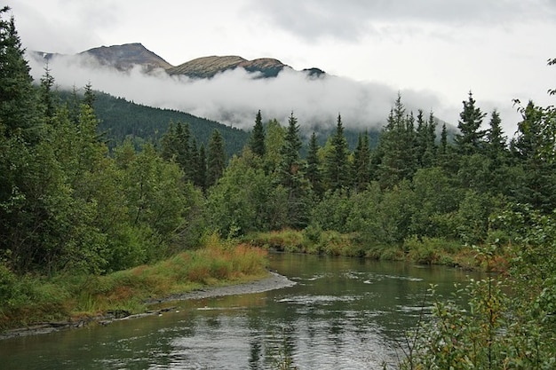 Wilderness clouds fog forest alaska trees cloud Free Photo