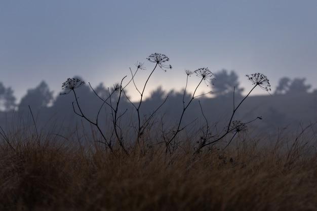 フィールドで育つ野生の花 無料写真