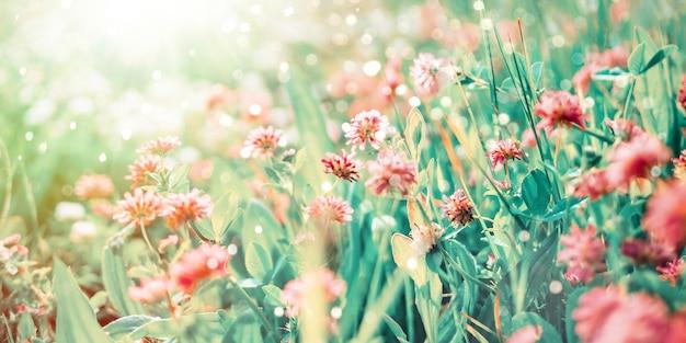 햇빛의 광선에 클로버의 야생화 프리미엄 사진
