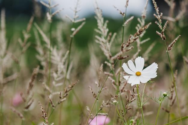 草原のクローズアップの野の花 Premium写真
