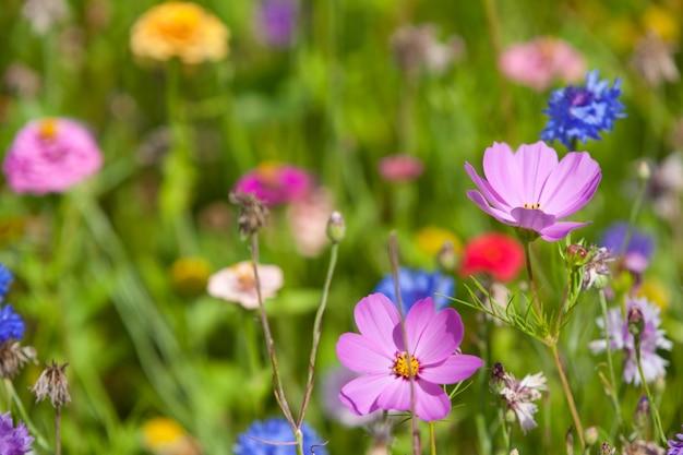 晴れた日の牧草地の野花。 Premium写真