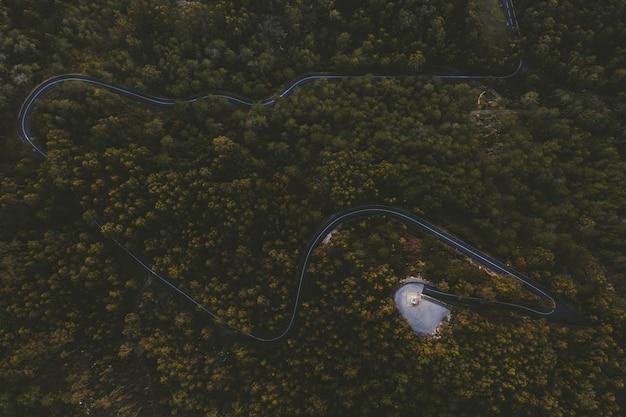 Извилистое шоссе в центре леса с высокими деревьями Бесплатные Фотографии