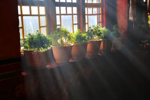 Window with flowerpots Free Photo