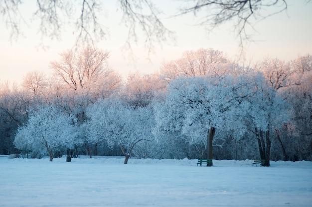 Winnipeg, winter frost Premium Photo
