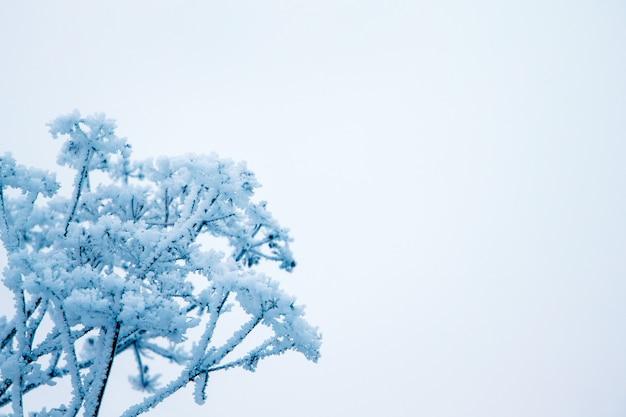 冬、霜で覆われた乾燥した植物の枝、右の自由な場所へ、持続性と耐久性のシンボル Premium写真