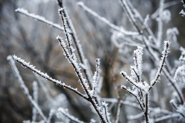 背景の雪の霧氷の木の冬の枝 Premium写真
