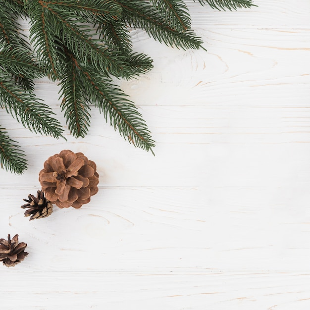 Winter composition of fir branch Free Photo