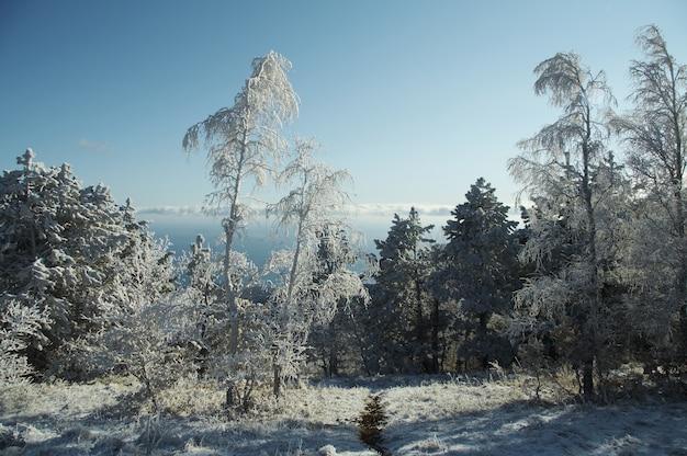 クリミア山脈の冬の森 Premium写真