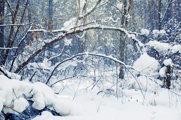 Winter forest scene Premium Photo
